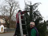 přípravy na rozsvícení stromu