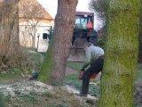 porážení stromu